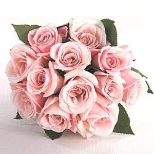 12 Pink Designer Long Stem Roses