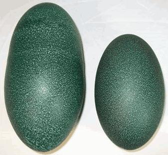 Emu Egg Shell