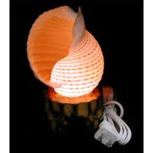 Sea shell lamps in cuddalore tamil nadu mariyam exports imports sea shell lamps in river side street mozeypictures Images
