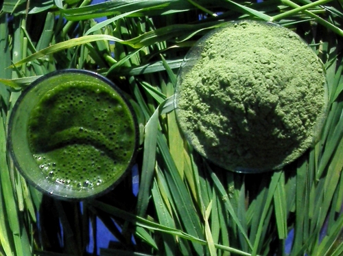 Barley Grass Powders