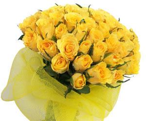 Friendship flowers in malviya nagar new delhi manufacturer - Flowers that mean friendship ...