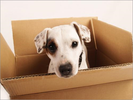 Pets Relocation Services in  Dlf Phase-Iv