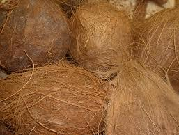 Coconut in  Mylapore