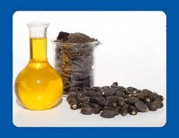Jatropha Oils