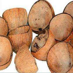 Coconut Shell in   Velampalayam