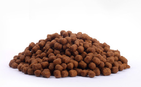 Big-Sized Adult Dog Food