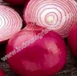Onion Sowing Seeds