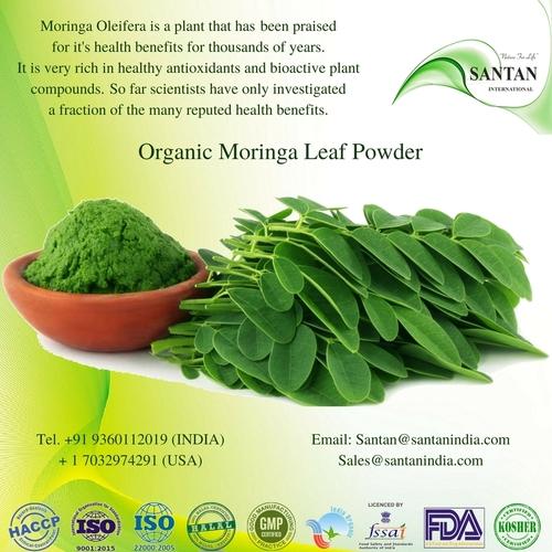 Skin Care Pure Bulk Moringa Leaf Oleifera Natural Powder in   Kumaramangalam (Post)