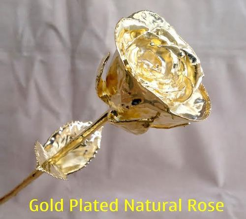 Gold Plated Natural Rose in  New Area