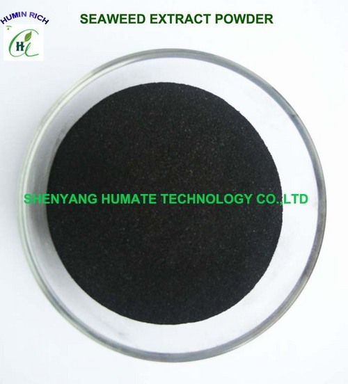 Seaweed Extract Flake/Powder