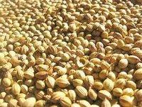 Badami Quality Coriander Seeds