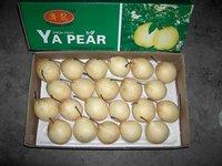 Chinese Ya Pear