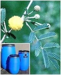 Acacia Catechu