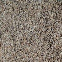Cumin Spice Seeds