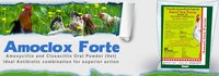 Amoclox Forte - Amoxycillin Trihydrate And Cloxacillin Sodium Powder