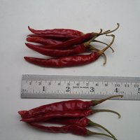 S 17 Teja Red Chilli
