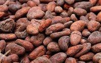 Cacao Bean (Organic Certified)