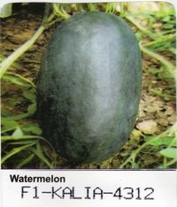 Hybrid Watermelon Seeds F1-KALIA-4312