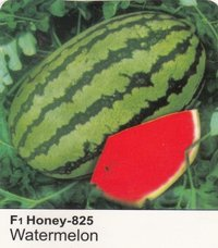 Hybrid Watermelon Seeds F1-HONEY-825
