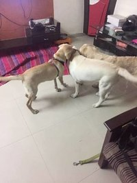 Pet Boarding Service