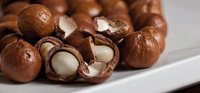 Fresh Macadamia Nuts