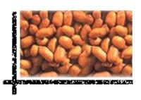 Bold Groundnut Kernels