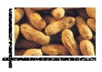 Inshell Groundnut Kernels