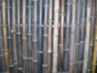 Black Bamboo Sticks