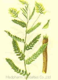 Astragalus Extract/Polysaccharide