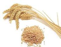 Broken Wheat (Dalia)