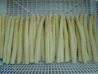 IQF White Asparagus