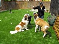 Pet Mat Artificial Grass Without Damage