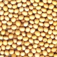 Soybean Seeds