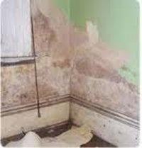 Anti Termite Control Service