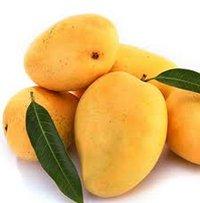 Unripe Kesar Mango