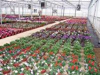 Green House Contract Farming Service