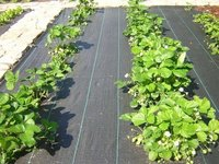 Ground Cover Weed Mat