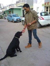 Dog Training Service