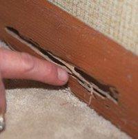 Affordable Termite Control Service