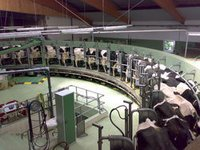 Dairy Farm Consultancy Services