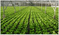 Horticulture Service