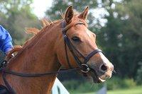 Horse Reins