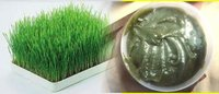 Natural Wheat Grass Ointment