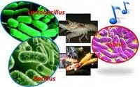 Pheniramine Maleate BP/ Ph Eur / USP