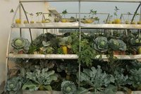 Rooftop Organic Farming Services