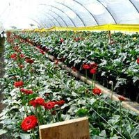 Flower Cultivation