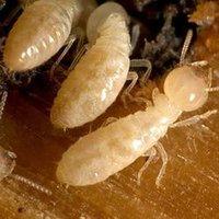 Anti-Termite Treatment Services