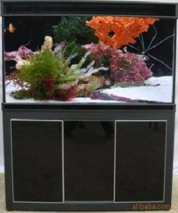 Arowana Aquariums