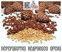 Pine Nut Kernels