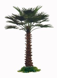 High Quality Artificial Palm Tree